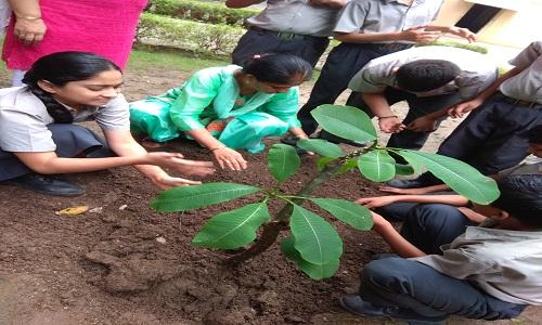 Plantation Week 2